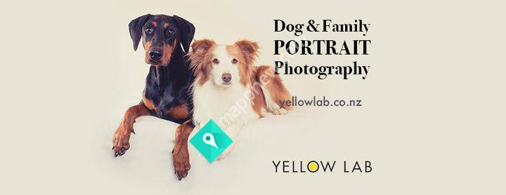Dog & Family Photographer I Yellow Lab